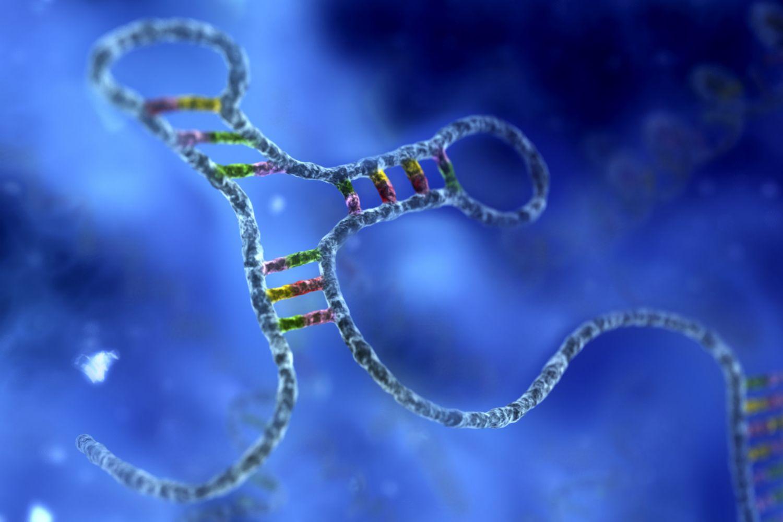RNA زیست فناوران رنا